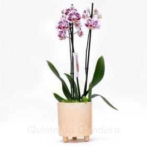 Vaso Ceramica 4 (1)